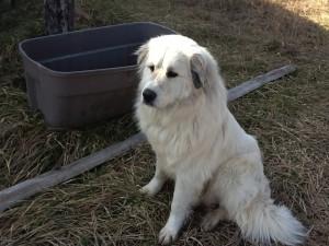 Maxie, 1 yr old.