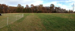 Green strips of fertilized pasture.