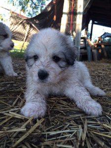 Adopted Dog Homesick